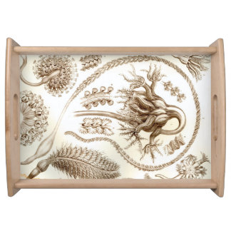 Ernst Haeckel Pennatulida Coral Serving Tray