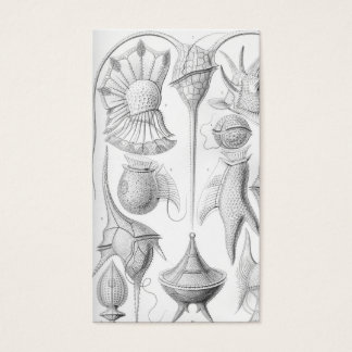 Ernst Haeckel Peridinea worms Business Card