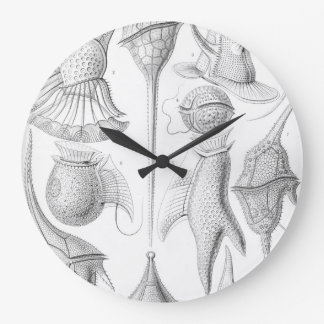 Ernst Haeckel Peridinea worms Clocks