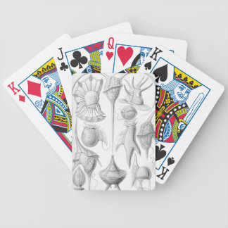Ernst Haeckel Peridinea worms Poker Deck