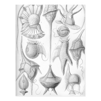 Ernst Haeckel Peridinea worms Postcard
