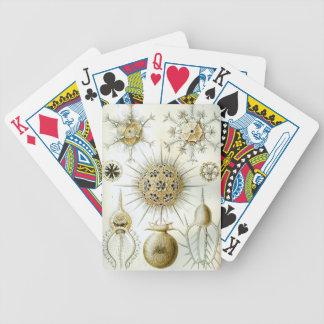 Ernst Haeckel Phaeodaria Bicycle Playing Cards