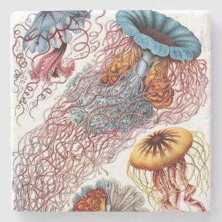 Ernst Haeckel's Discomedusae Stone Coaster