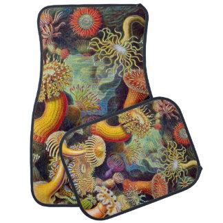 Ernst Haeckel Sea Anemones Marine:Actiniae Car Mat