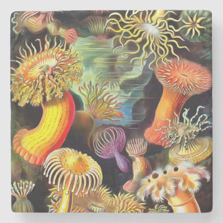 Ernst Haeckel Sea Anemones Vintage Art Stone Coaster