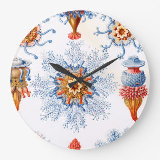 Ernst Haeckel Siphonophorae jellyfish bluebottle! Clocks