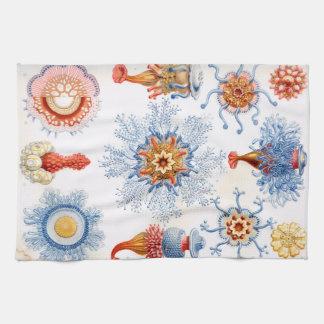 Ernst Haeckel Siphonophorae jellyfish bluebottle! Kitchen Towel