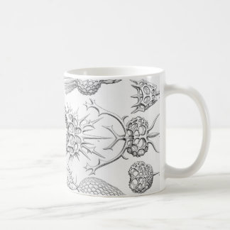 Ernst Haeckel  Spyroidea Sea Creatures Coffee Mug