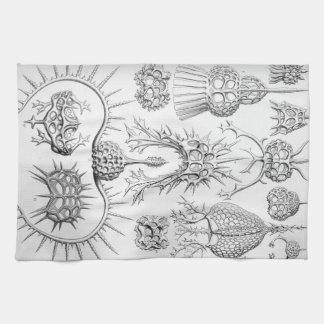 Ernst Haeckel  Spyroidea Sea Creatures Kitchen Towel