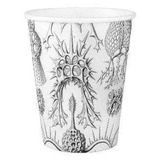 Ernst Haeckel  Spyroidea Sea Creatures Paper Cup