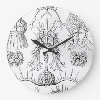 Ernst Haeckel  Spyroidea Sea Creatures Wallclock