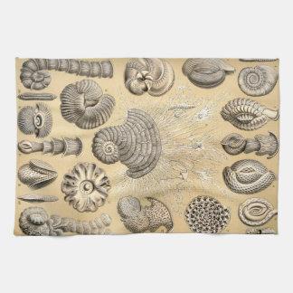 Ernst Haeckel Thalamophora shells Kitchen Towel