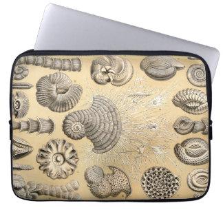 Ernst Haeckel Thalamophora shells Laptop Sleeve