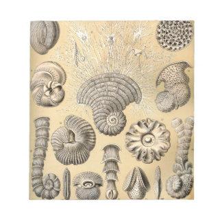Ernst Haeckel Thalamophora shells Notepad