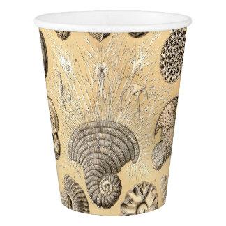 Ernst Haeckel Thalamophora shells Paper Cup