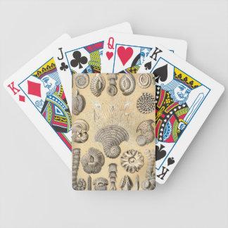 Ernst Haeckel Thalamophora shells Poker Deck