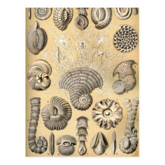 Ernst Haeckel Thalamophora shells Postcard