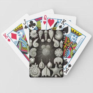 Ernst Haeckel Thalamphora Bicycle Playing Cards