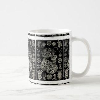Ernst Haeckel Thuroidea Sea Cucumbers Coffee Mug