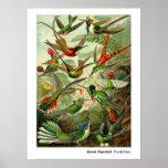Ernst Haeckel Trochilidae Hummingbird Poster