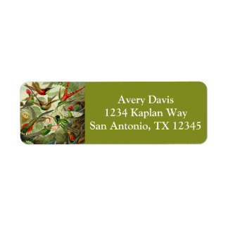 Ernst Haeckel Trochilidae Hummingbird Return Address Label