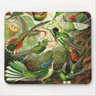 Ernst Haeckel - Trochilidae Hummingbirds Detail2 Mouse Pad