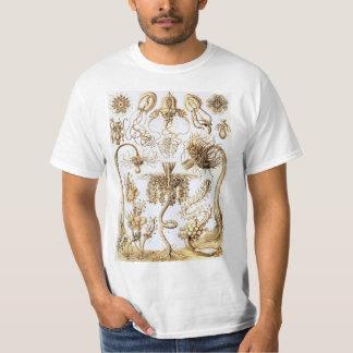 Ernst Haeckel Tubularia T-Shirt