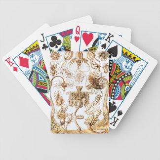 Ernst Haeckel Tubulariae Bicycle Playing Cards