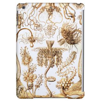 Ernst Haeckel Tubulariae iPad Air Cover