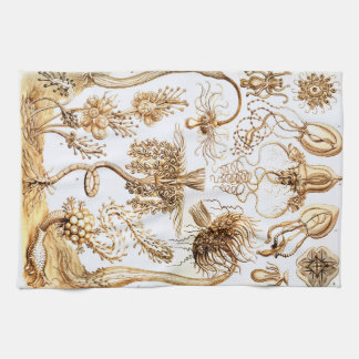 Ernst Haeckel Tubulariae Kitchen Towel