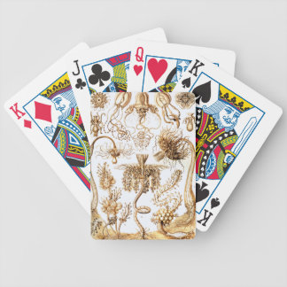 Ernst Haeckel Tubulariae Poker Deck