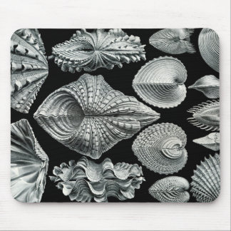 Ernst Haeckel Vintage Shells Mousepad