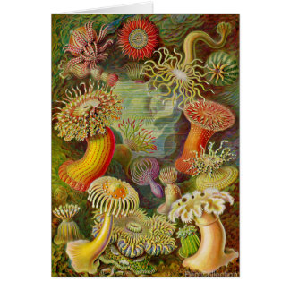 Ernst Haeckel's Actinae Ocean Life Card