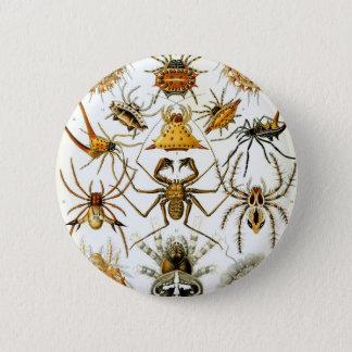 Ernst Haeckel's Arachnida Spiders 2 Inch Round Button