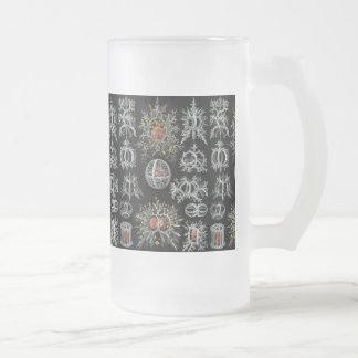 Ernst Haeckel's Stephoidea Frosted Glass Beer Mug