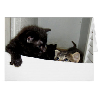 Escaping Kittens Greeting Card