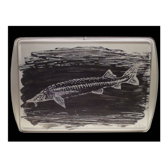 Etching - Sterlet Sturgeon Postcard