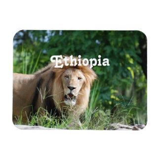 Ethiopia Lion Magnet
