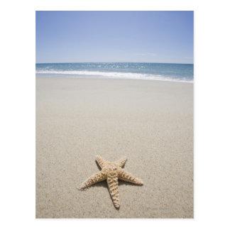 Étoiles de mer sur la plage par l'Océan Atlantique Carte Postale