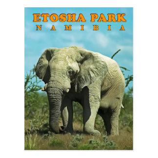 Etosha, Namibia Postcard