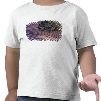 EU, France, Provence, Lavender fields T-shirts