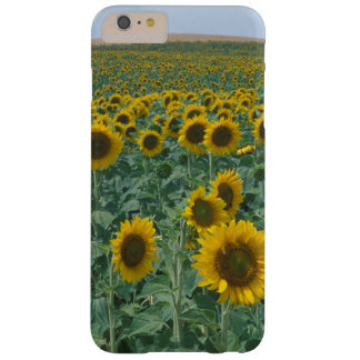 EU, France, Provence, Sunflower field Barely There iPhone 6 Plus Case