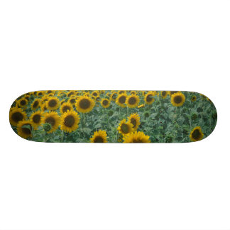 EU, France, Provence, Sunflower field Skate Decks