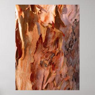 Eucalyptus Bark Poster