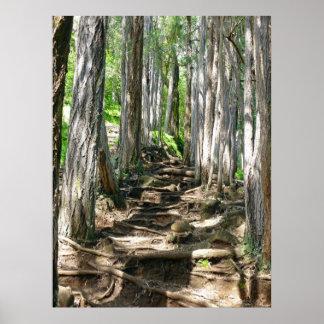 Eucalyptus Tree Trail Poster