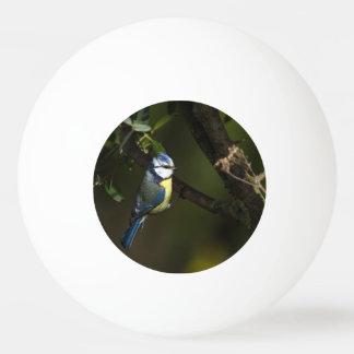 Eurasian bluet tit, cyanistes caeruleus ping pong ball