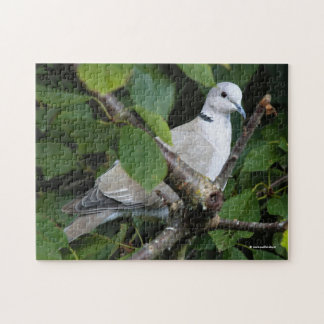 Eurasian Collared Dove on the Cherry Tree Jigsaw Puzzle
