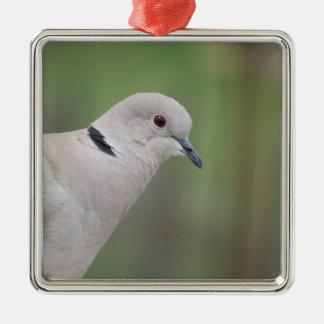 Eurasian Collared Dove Ornament