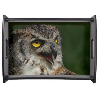 Eurasian eagle-owl serving tray