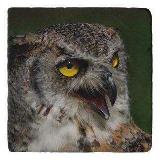 Eurasian eagle-owl trivet